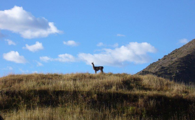 Med mountainbike i Peru